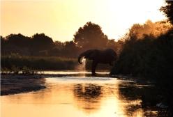 05 elephant drinking