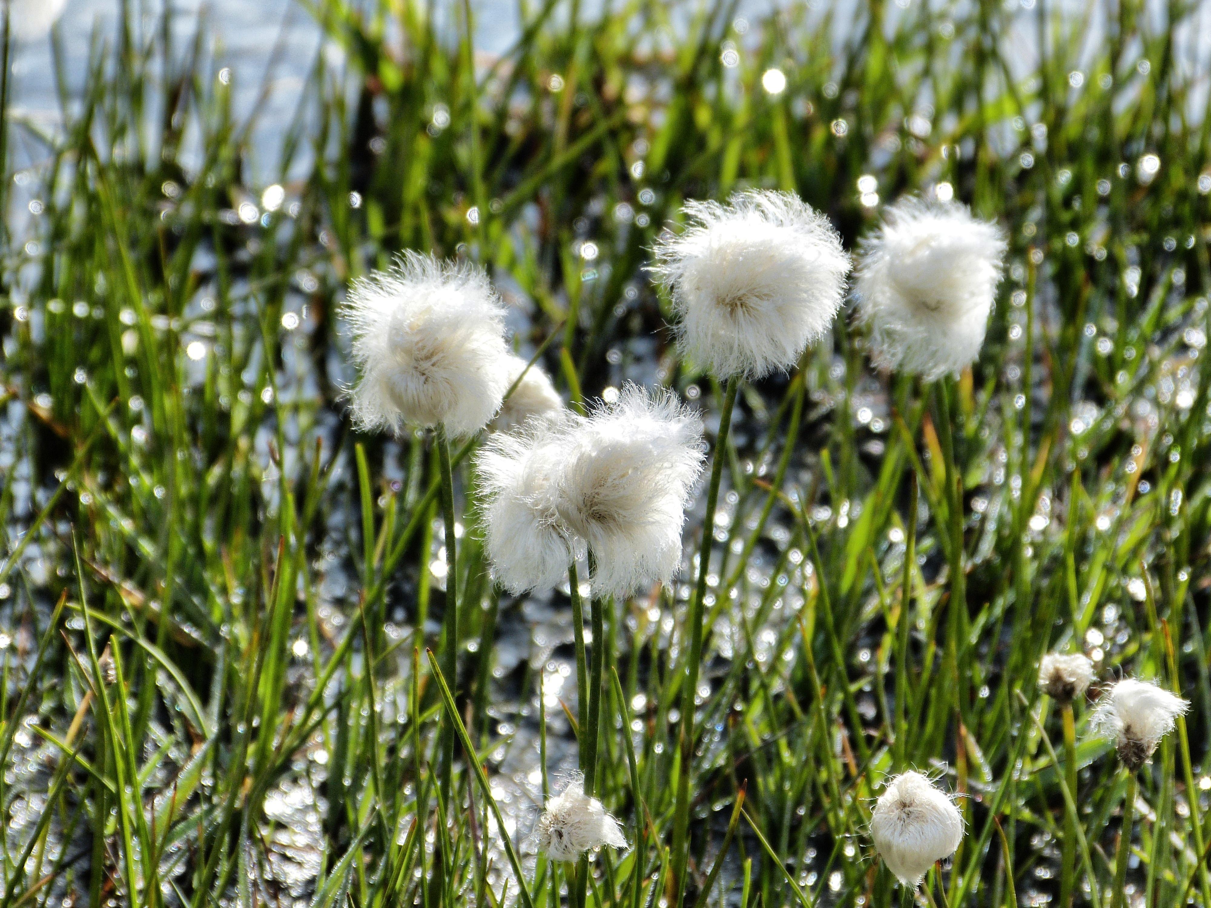 White mountain flowers the thirdeyeworld white mountain flowers photo mightylinksfo