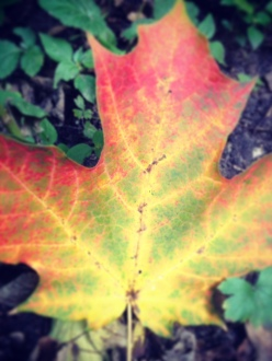 Fall leaf Minnesota