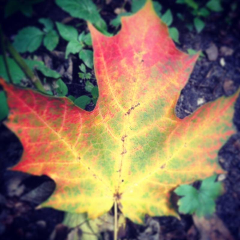 Fall leaf Minnesota