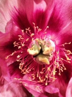 Flowers thirdeyemom